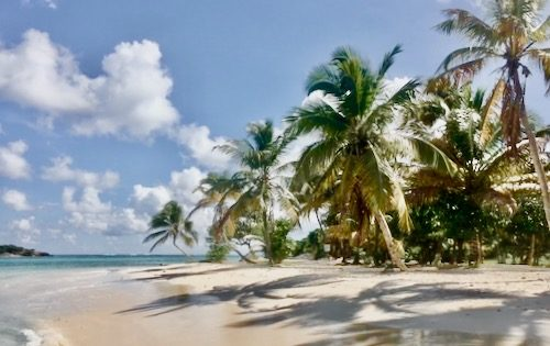 Palm trees swaying in the breeze in Tobago Cays, one of our stops on this crewed yacht charter in the Grenadines 500