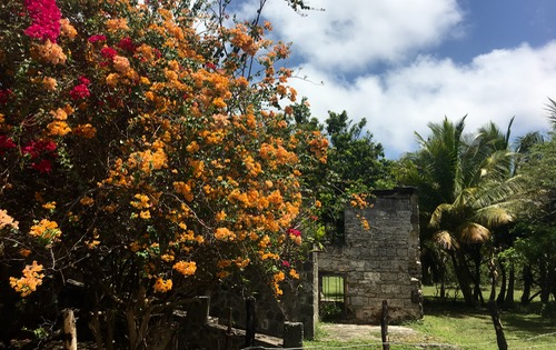 Beautiful Bougainvillea found on a walk across Bequia to the East coast.