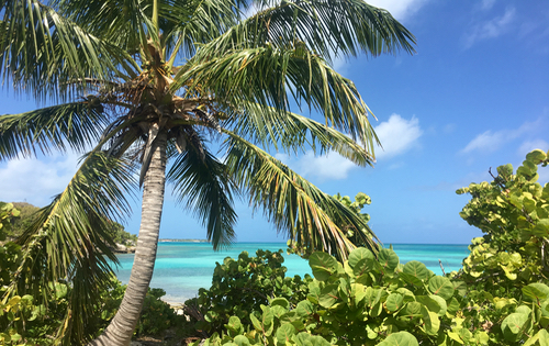 Palm trees on one of the smaller islands around Antigua & Barbuda