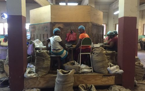 Local ladies sorting Nutmeg at the Nutmeg Factory in Gouyave, Grenada